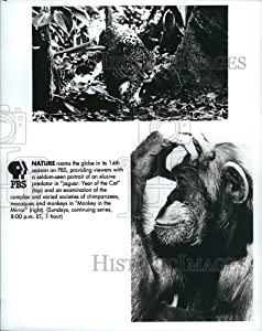 Historic Images - Press Photo Jaguar: Year of The Cat & Monkey in The Mirror on PBS' Nature
