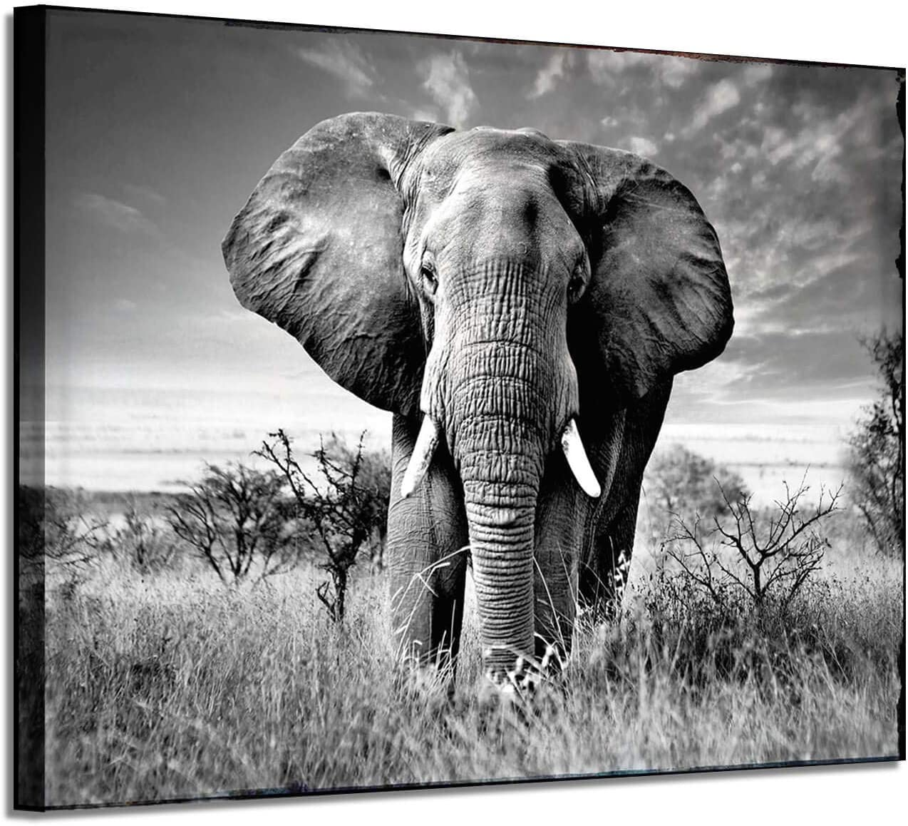 Elephant Picture Canvas Wall Art: African Wild Animals Artwork Painting Print for Living Room (36'' x 24'' x 1 Panel)