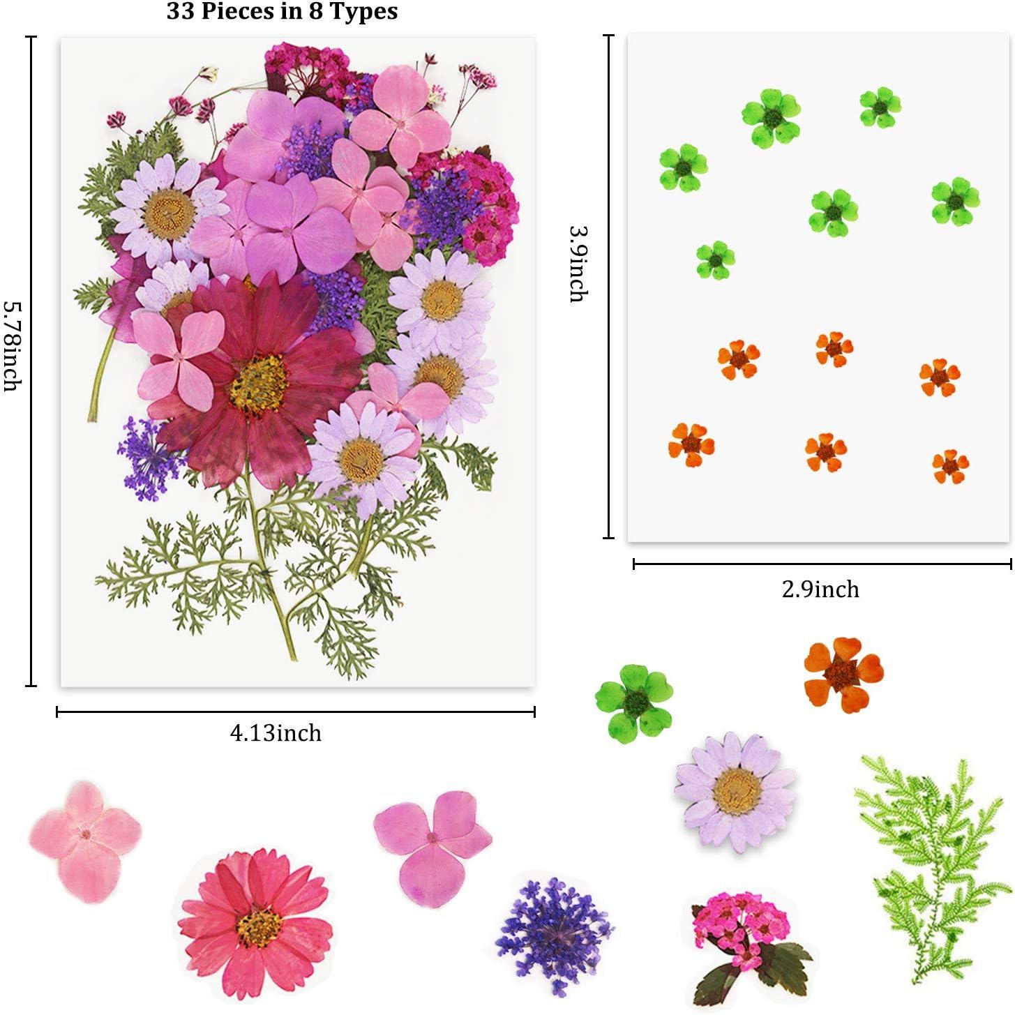Dried flower resin Purple Flower Jewelry Real dried wildflower Earrings Real white wildflower earrings
