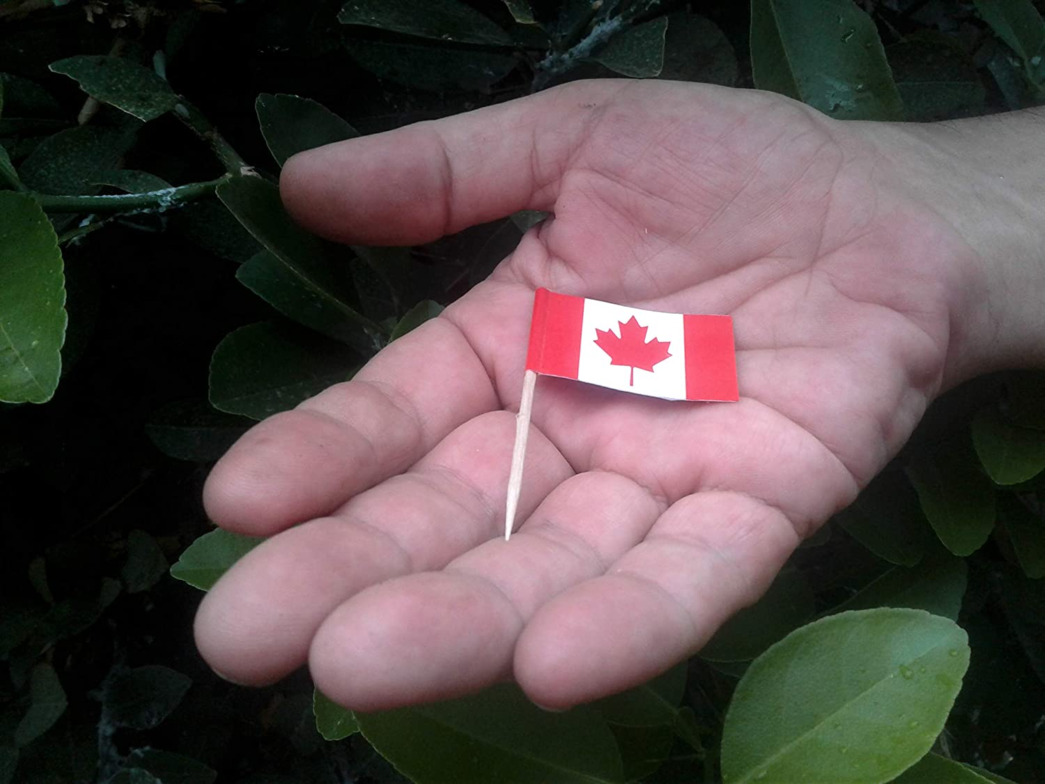 Canada Canadian Toothpick Garnish Flags by Nesha 100 Pack
