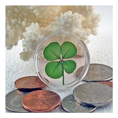 Clovers Online Genuine Four Leaf Clover Good Luck Pocket Token: Everything Else