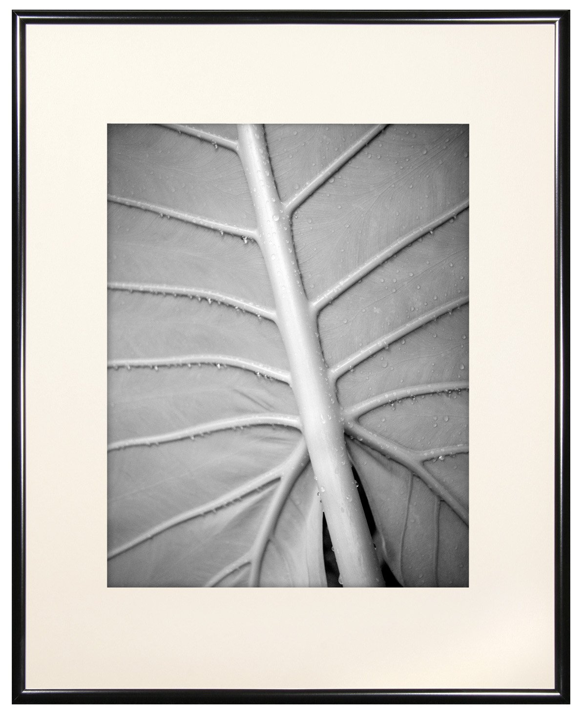 MCS 11x14 Inch Gallery Aluminum Frame with 8x10 Inch Mat Opening, Black (44143) MCS Industries Inc.