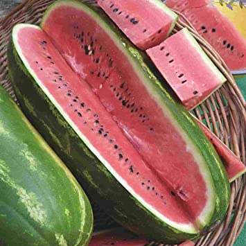 BLACK DIAMOND WATERMELON CAN GROW TO 75 AVERAGES 50 POUNDS LBS // SO SWEET