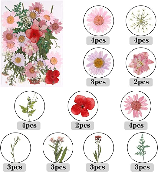 4Pack Mixed Real Dried Flowers for Scrapbooking//Nail Art Decor//DIY Art Makeup Floral Baring 140 Pcs Natural Pressed Dried Flowers and Green Leaves