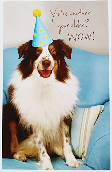 Amazon Com You Re Another Year Older Wow People Years Go By Fast Funny Aging Happy Birthday Greeting Card W Dog Office Products