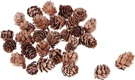 120er pack Natürliche Pine Cones Echte Kleine Tannenzapfen Schwarzkiefer