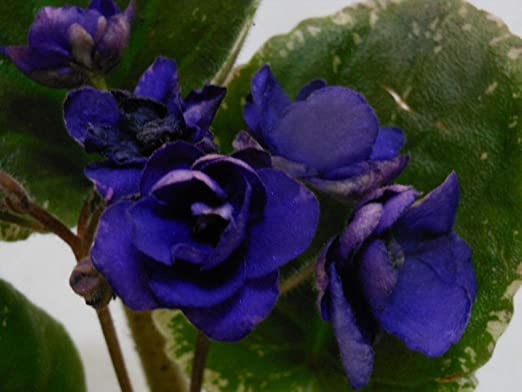 Portal Cool Tipo 4 Huerta Plantas Blooms Pimienta Coloreada ...