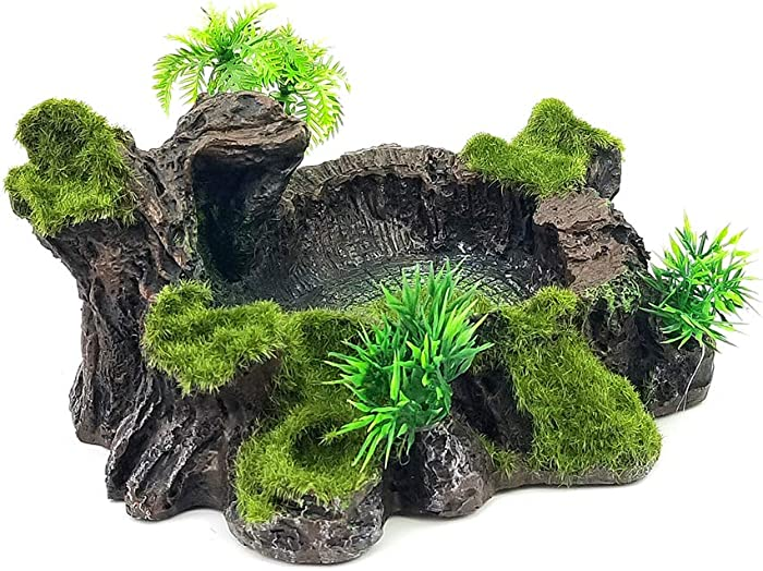 Top 10 Savannah Decor Terrarium
