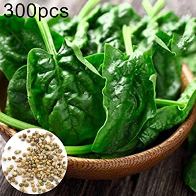 hudiemm0B Spinach Seeds, 300Pcs Spinach Seeds Easy Grow Farm Field Nutritious Vegetable Garden Plant Spinach Seeds: Sports & Outdoors