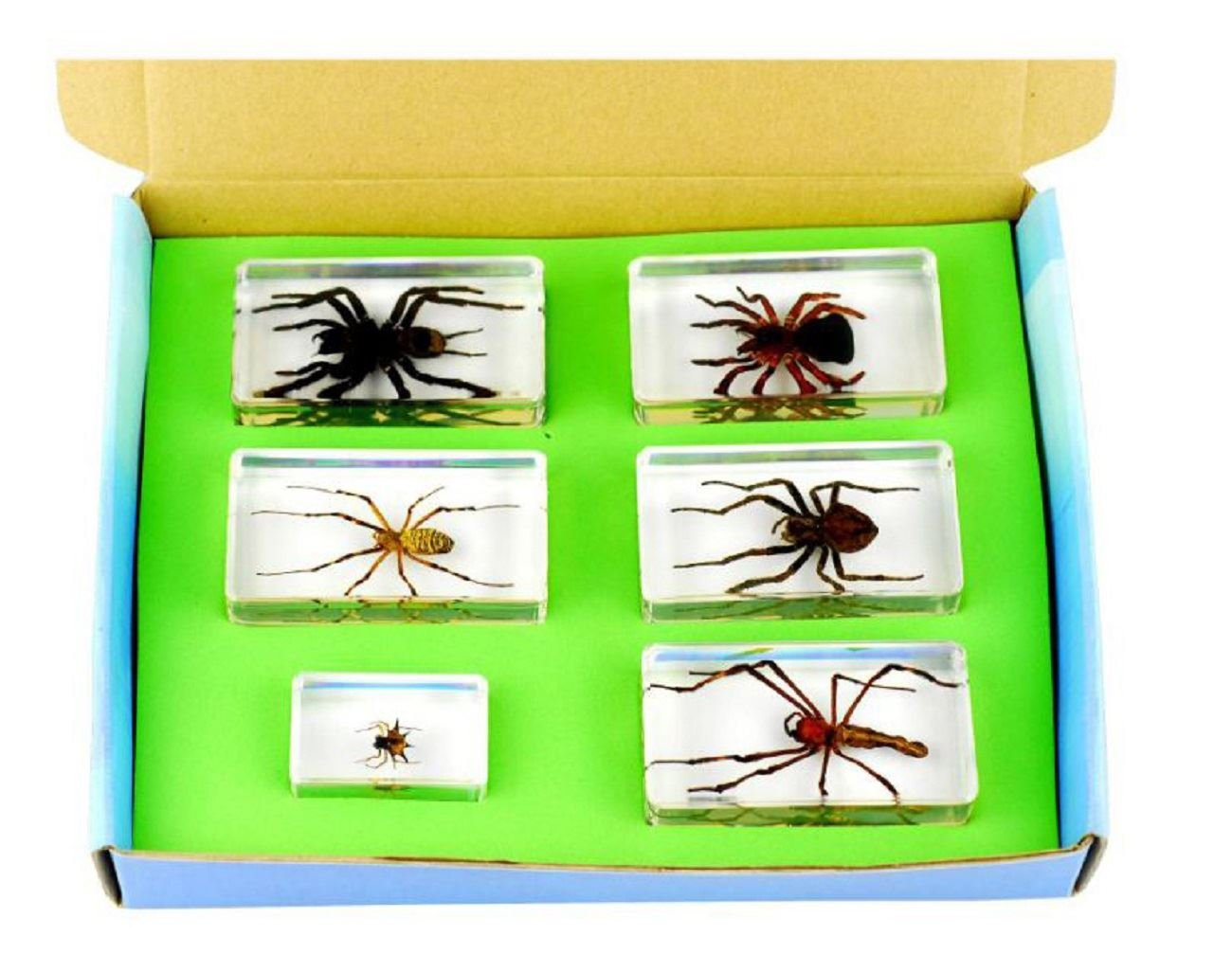 Real Nature 6 Piece Insect Spider Arachnid Paperweight Set Taxidermy