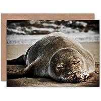 Greetings Card Birthday Gift Animal Photo Hawaiian Monk Seal Asleep