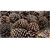 2 Pound Box Assorted Natural Pine Cones