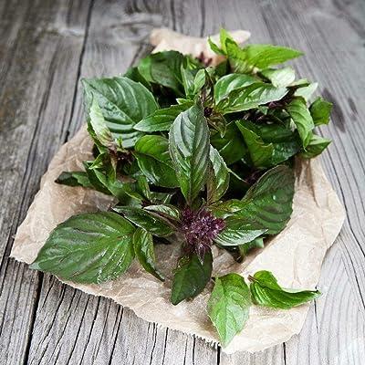 Thai Basil Seeds - Ocimum basilicum - 200+ Seeds! : Garden & Outdoor