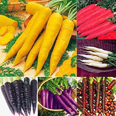 Oliote 1 Pack Carrot Seeds Garden Vegetable Plants Multi-Colored Carrots Seeds Vegetables : Garden & Outdoor
