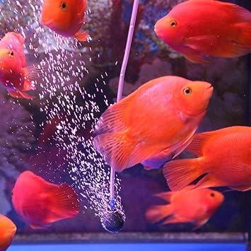 igemy nueva Pro burbuja de aire Piedra Aireador - oxígeno Acuario Fish Tank bomba de estanque: Amazon.es: Hogar