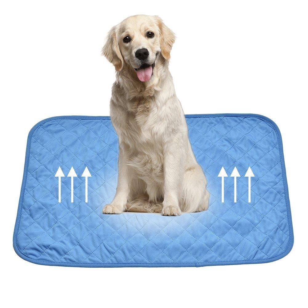 XGZ Alfombrilla de refrigeración para mascotas, almohadilla de gel frío para mascotas, almohadilla de gel frío para gatos y perros: Amazon.es: Productos ...