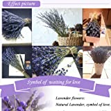 WGIA Natural Dried Lavender Bundles - Freshly