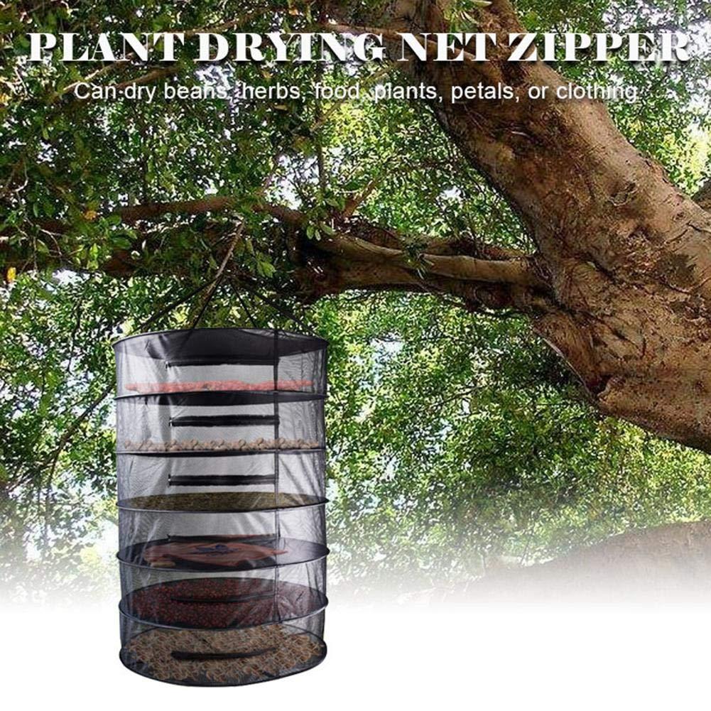 Chifans Kit de Cultivo de Plantas hidropónicas para el ...