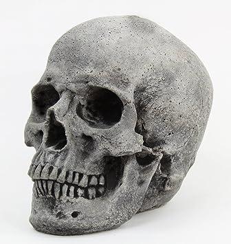 Amazon.com : Skull Head Concrete Yard Sculpture Cement Figurine ...