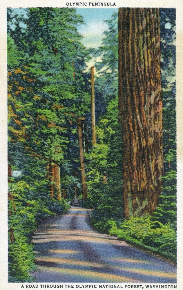 オリンピック国立公園、ワシントン – View of a木製Road Through The Park 36 x 54 Giclee Print LANT-23917-36x54 36 x 54 Giclee Print  B01MG3O5Y5