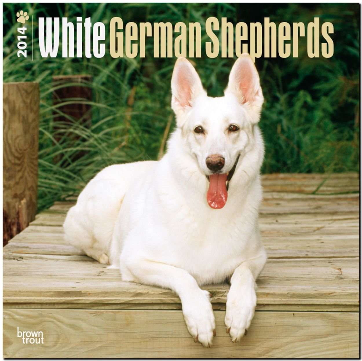 white-german-shepherds-2014-weisse-schferhunde-original-browntrout-kalender-mehrsprachig-kalender