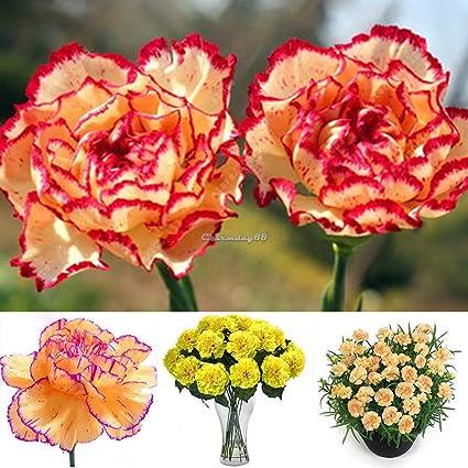 New Nice Adorable Flower Fragrant Seeds Fragrant Blooms Rose Flower C1MY