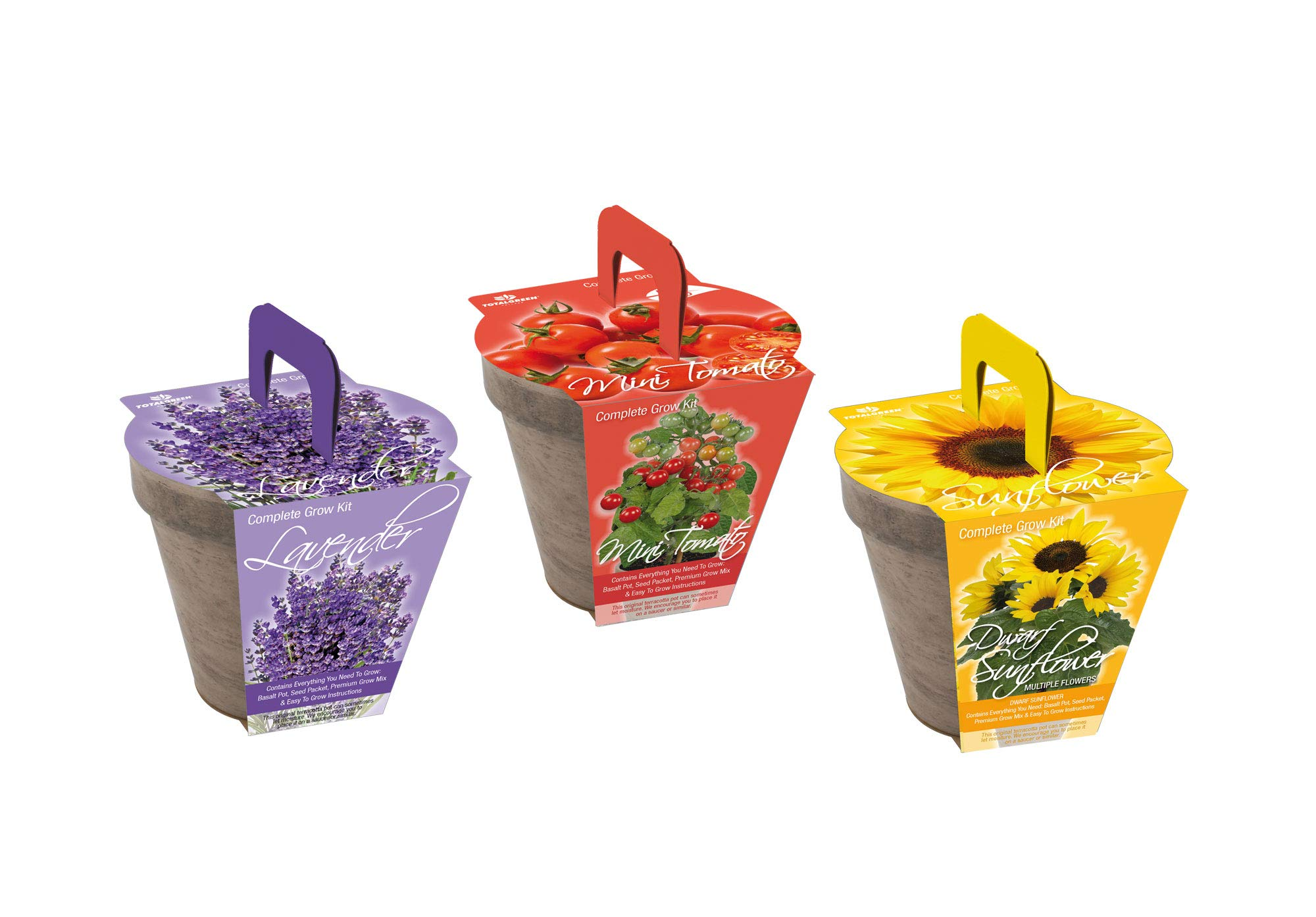 TotalGreen Holland Special Mini Tomato Grow Kit | Grow Fresh Mini Tomato Seeds Indoors | Great Gift Item | Grow Your Own Mini Tomato Plants in Unique Basalt Pot | Exclusive Kit by TotalGreen Holland by TotalGreen Holland (Image #7)