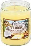 Pet Odor Exterminator Jar Candle - Pineapple & Coconut
