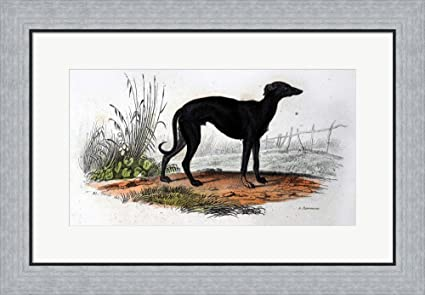 Amazon.com: Dog VI by Georges-Louis Leclerc, Comte de Buffon Framed ...