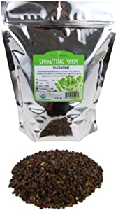 Bulk Organic Buckwheat Sprouting Seed - 2 Lbs - Unhulled - Organic - Gardening, Growing Salad Greens, Sprouts & Food Storage - Buck Wheat Sprout