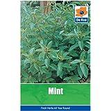 Mint Seeds
