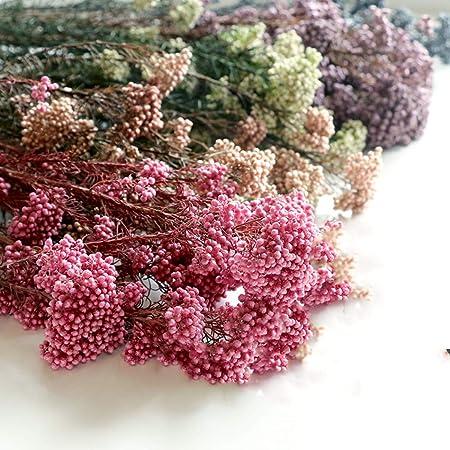 INVISIKAYAK Craspedia globosa Material Flor Inmortal Eterna Flores Regalo 16# blanco