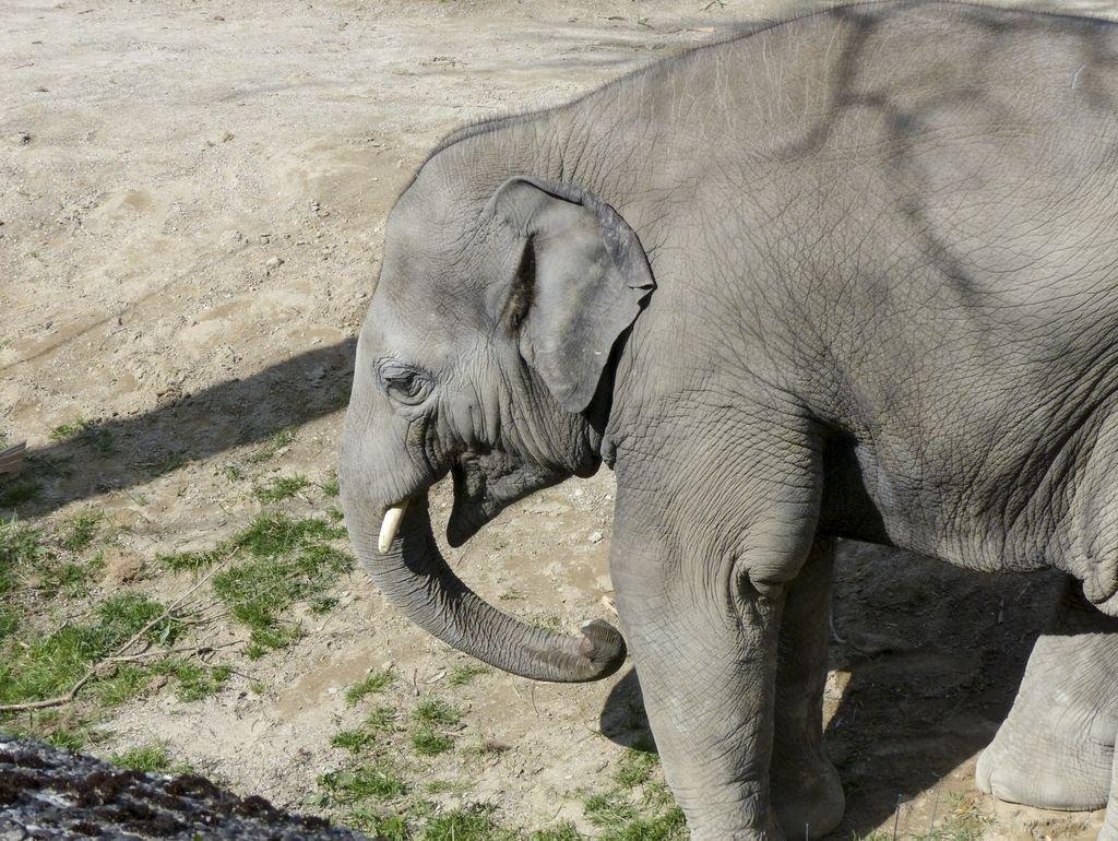 Lais Puzzle éléphant éléphant éléphant 1000 Pieces B074KRQFD9 4ad888