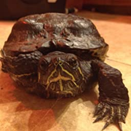 Amazon com: Customer reviews: Wardley Premium Amphibian and