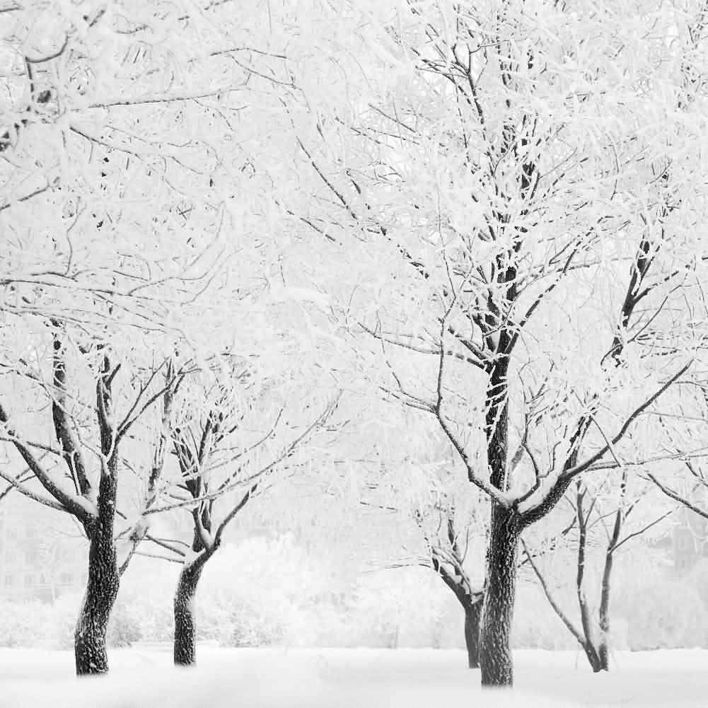 GladsBuy Real Winter Snow 10' x 10' Digital Printed Photography Backdrop Christmas Theme Background YHA-054