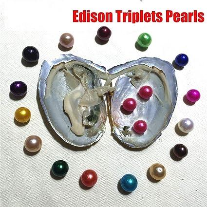 Amazon.com: XINNA 8 unidades de ostras de perlas cultivadas ...