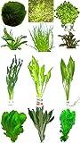 10 Bunde ca. 60 Pflanzen + Javamoos, Mooskugeln, Dünger, Aufbereiter