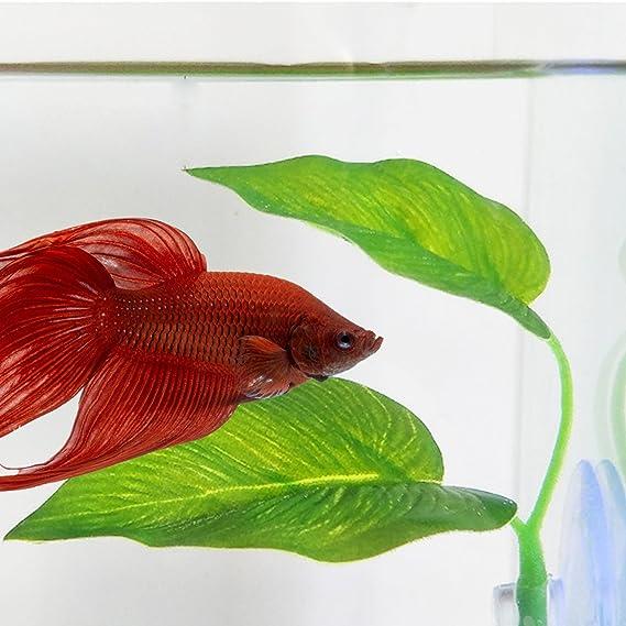 SLSON 2 Pack Betta Fish Leaf Pad Betta Hamaca Juguetes Acuario Accesorios Plantas Plástico con Ventosa Verde: Amazon.es: Productos para mascotas