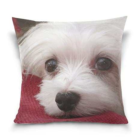 Amazon.com: XINGCHENSS - Funda de almohada para mascota de ...