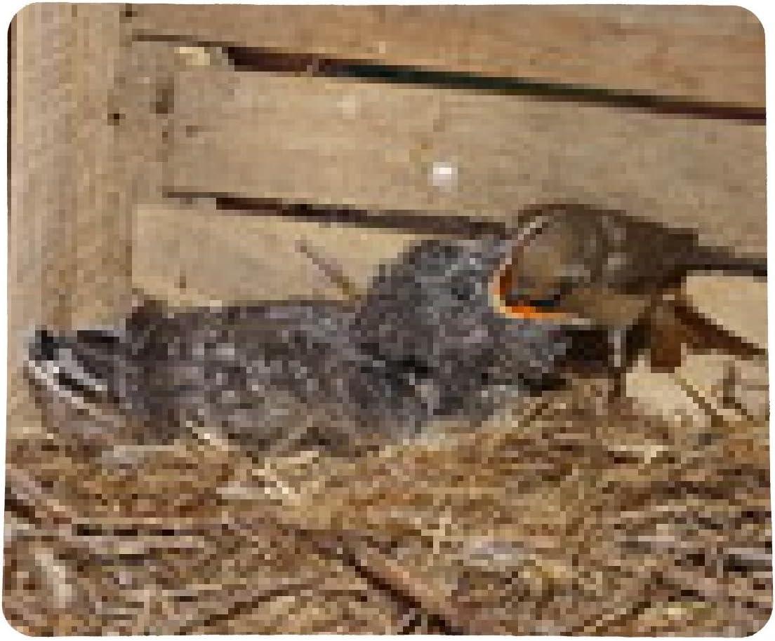 alfombrilla de ratón Cuco aves colirrojo - rectangular ...
