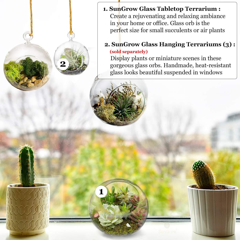 Tabletop Plant Containers Creates Mini Glass Terrarium Garden