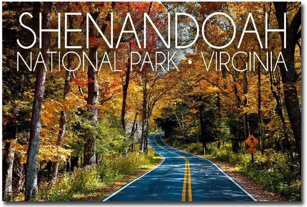 "Virginia Road in Fall Refrigerator Magnets Size 2.5/"" x 3.5/"" Shenandoah"