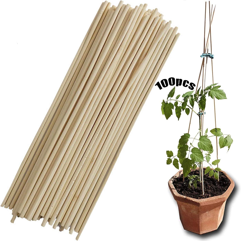 Plante Grimpante Haricot 100 Pieces Jardin De Cannes Piquet De Jardin Baton De Bambou Canne De Bambou Support De Plante De B/âtons Support V/ég/étal De Bricolage Pour La Production De Tr/épieds De Jardin