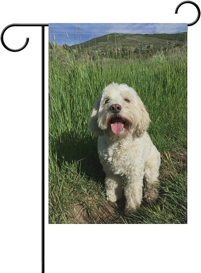 "Patriotic decorative Garden Flag ~12/""x18/"" White Maltipoo Dog Breed"