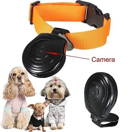 Perro Gato Cachorro Mascota Mini Cam cámara grabadora de vídeo videocámara 480P cuello Monitor DVR negro