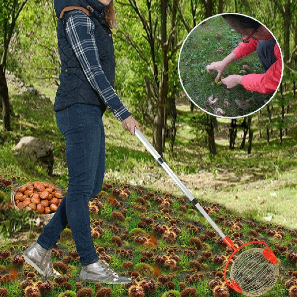 Chalkalon Ramasseur de Noix Rouleau Ramasse Noix Noisettes Fruit Panier /à Fruits en m/étal avec Panier Ramasse Noix avec Manche T/élescopique 70 /à 127 cm