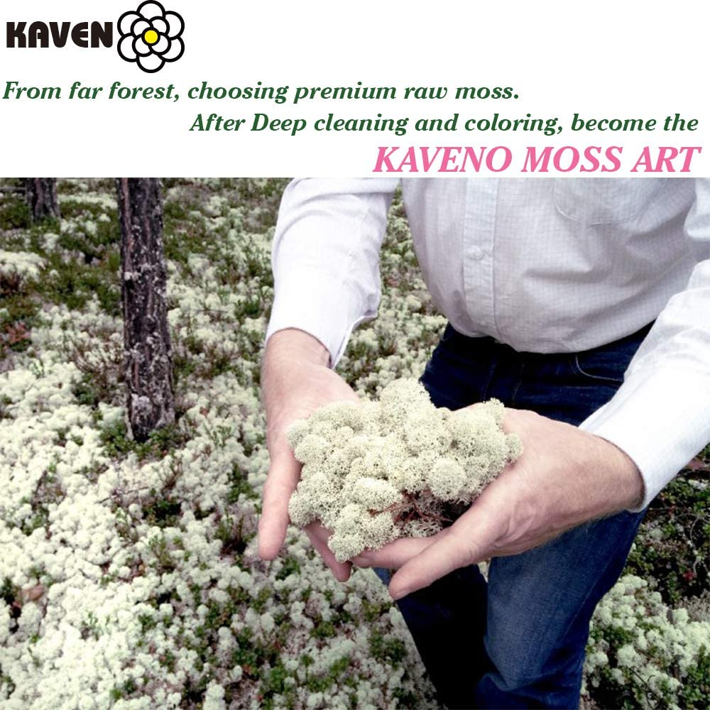 Any Craft or Floral Project or Wedding Other Arts Terrariums Green Moss for Fairy Gardens Moss Preserved Green 8oz