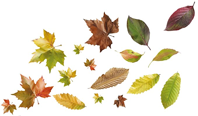PLAGE 157011 Adhesivos de decoración-Hojas de otoño, 2 Hojas 29,7 x ...