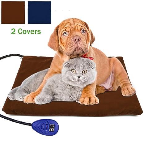 dual beds mats heated bed kitten soft under a shekinahduffer for on best cats images thermostats value pinterest placed kittens cat sleeping dog designed foam mat