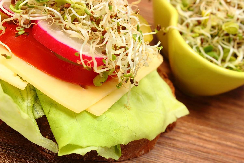 Semillas orgánicas para germinados de alfalfa - Semillas para germinar brotes de alfalfa - fuente de energía saludable - nutritivas y sabrosas para ...